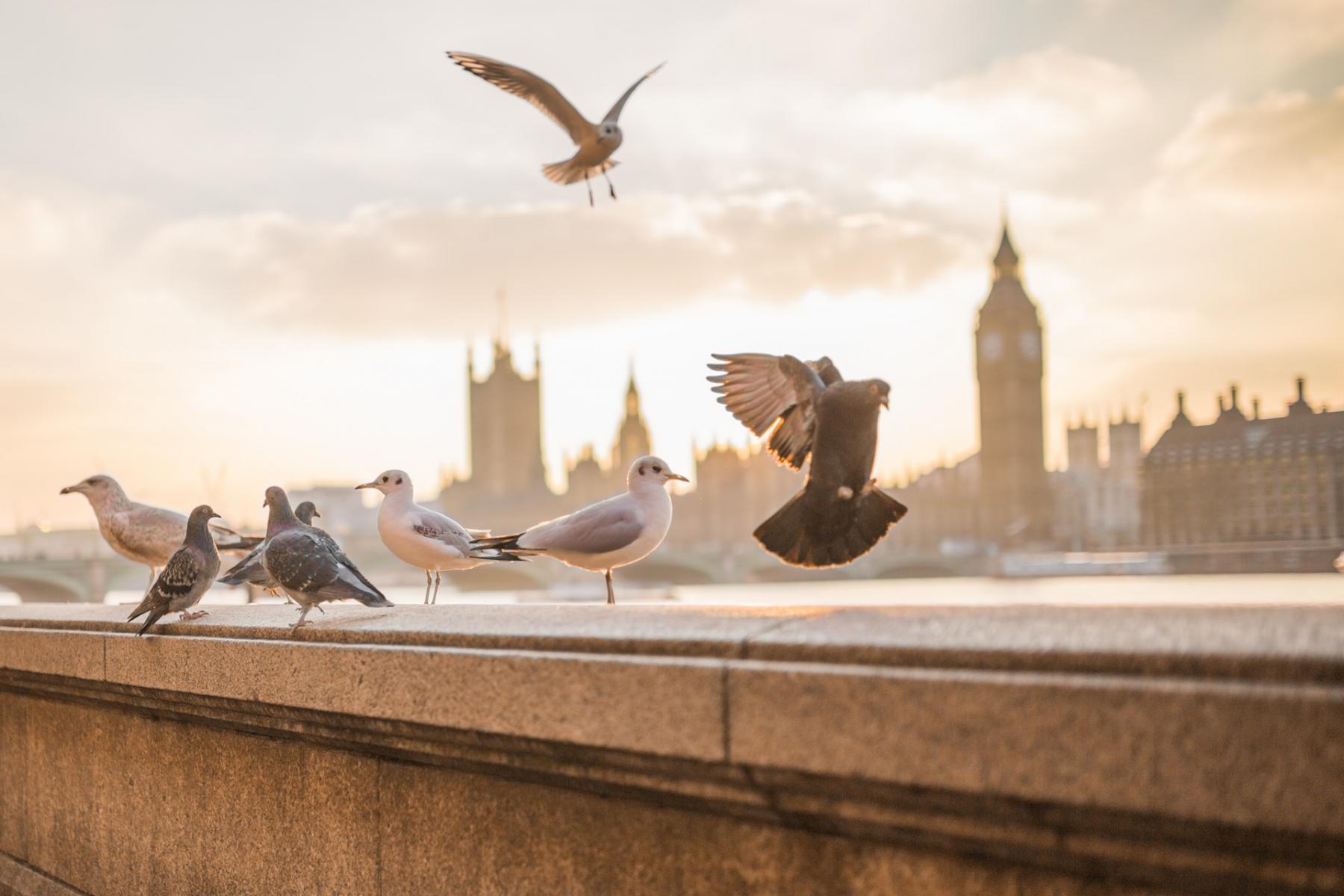 Фото город Лондон, Великобритания (906967941)
