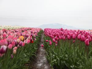 Фото город Ванкувер, Канада (341529807)