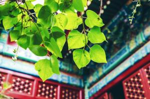 Фото город Пекин, Китай (2059659499)