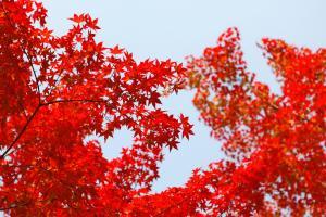Фото город Сеул, Республика Корея (1649783489)