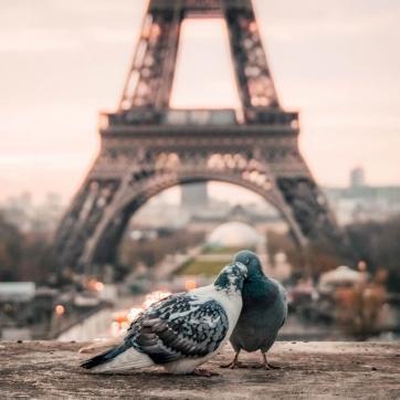Фото город Париж, Франция (109603713)