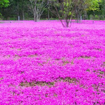 Фото город Токио, Япония (106553437)