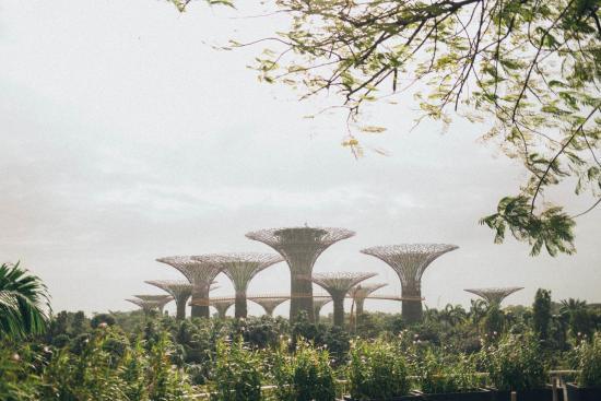 Фото город Сингапур, Сингапур (1407828943)