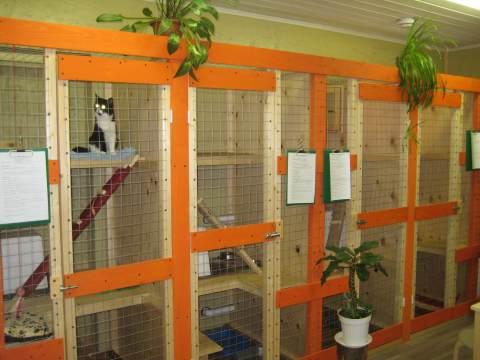 Отели для животных, или куда пристроить своего любимца на время уезда.